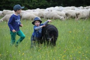 Die Kinder wachsen mit den Schafen auf